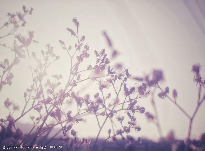 梦幻花紫色花朵