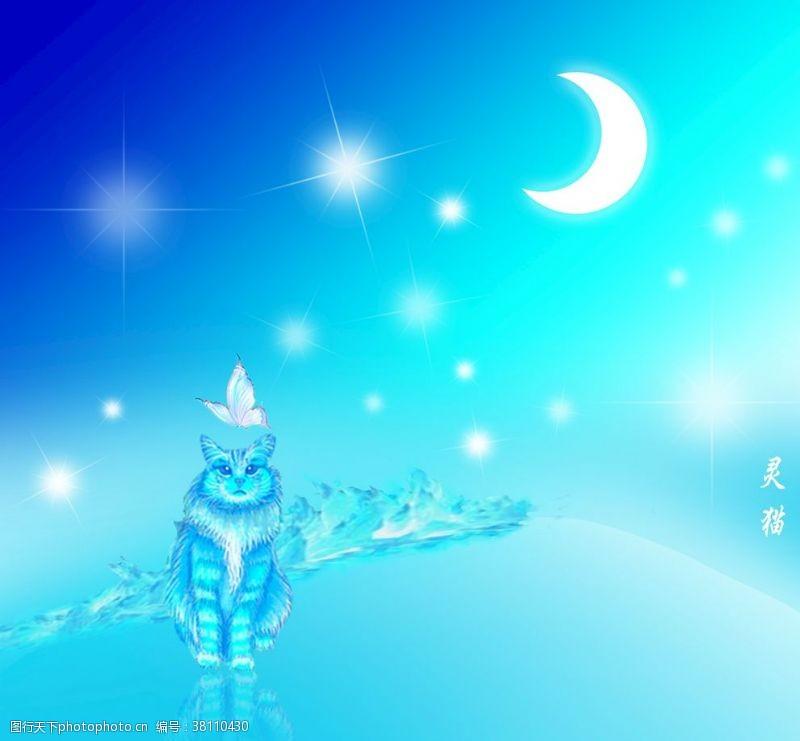 冷色系灵猫