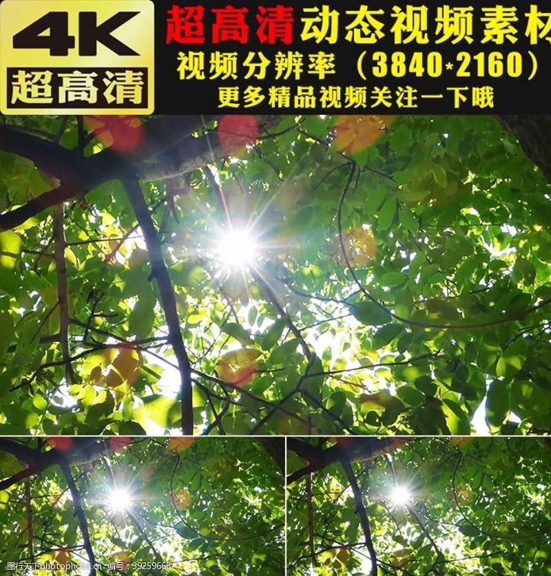 影视素材小清新叶子阳光空镜头视频素材