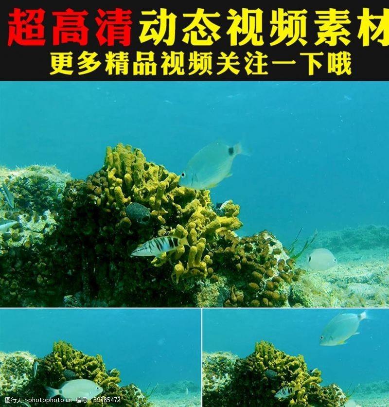 水草海底世界鱼群海藻实拍视频素材
