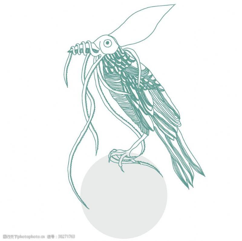 彩铅手绘鸟类