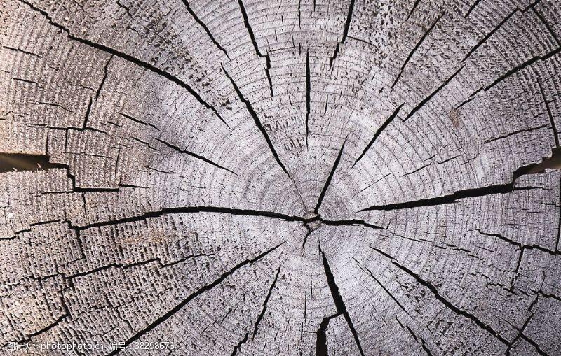 集邮老树桩