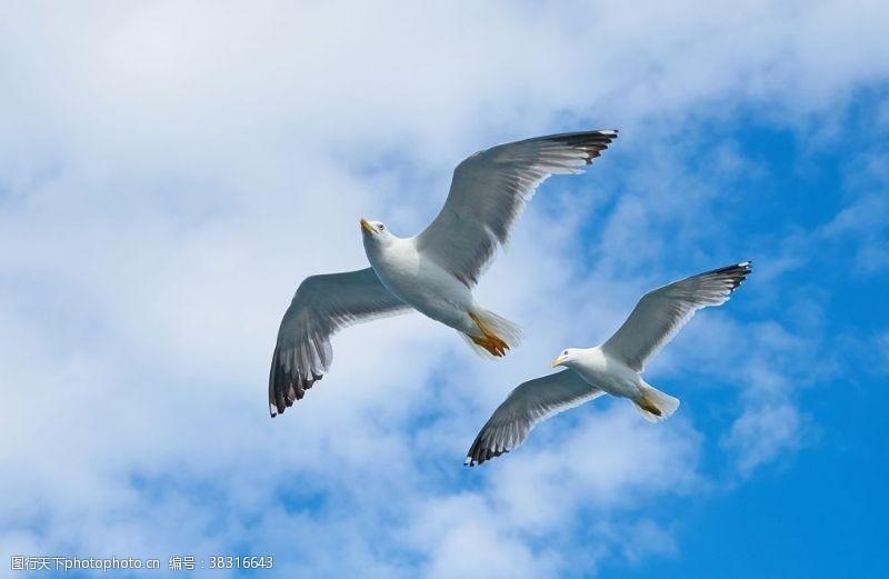 72dpi海鷗