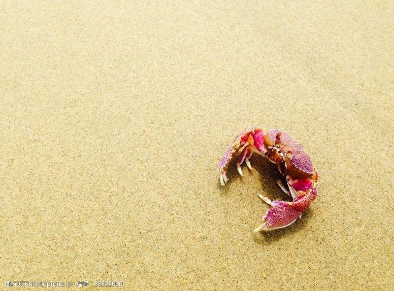 大閘蟹海報螃蟹