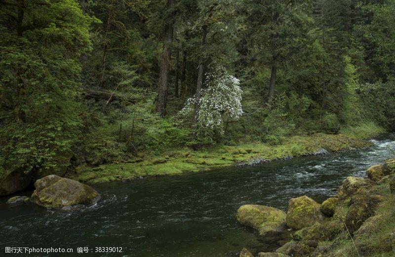 清澈森林小溪