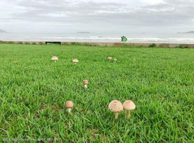 海岛摄影草地蘑菇