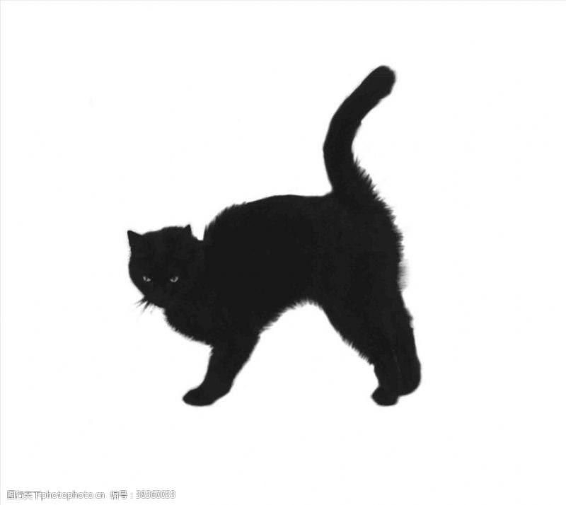 手账素材猫