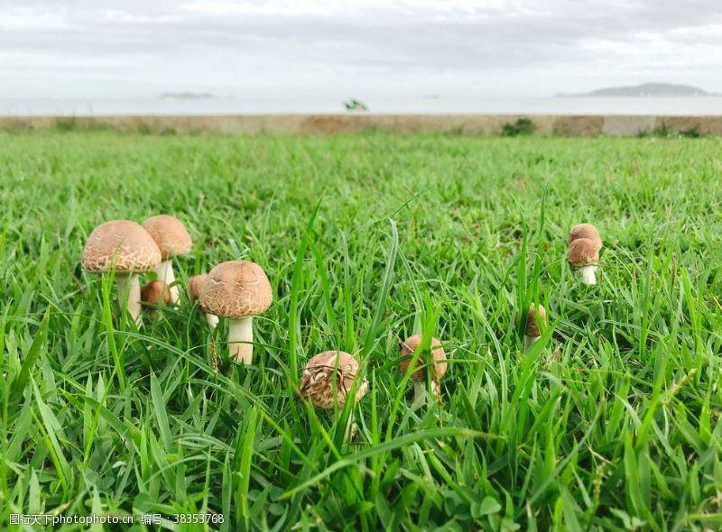 海岛摄影雨后蘑菇