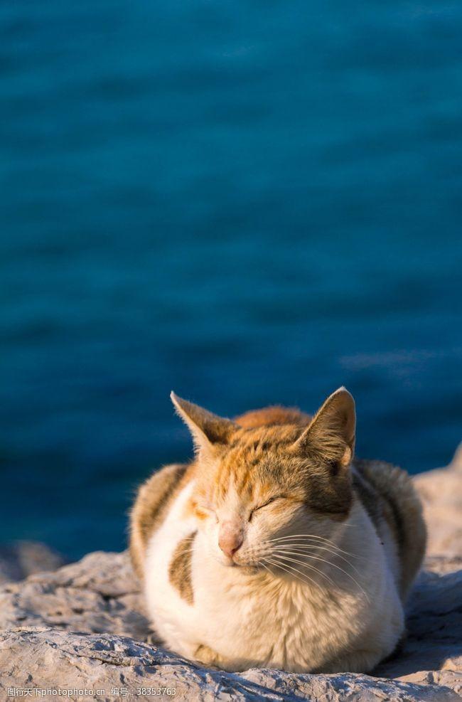 浪花海边猫