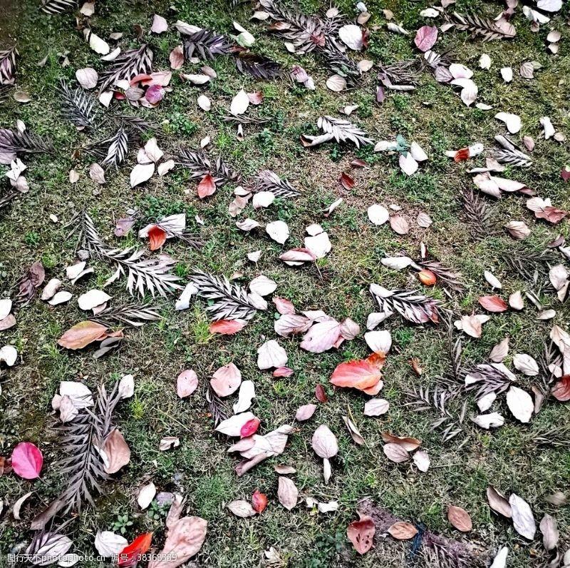 拍摄落叶飘零