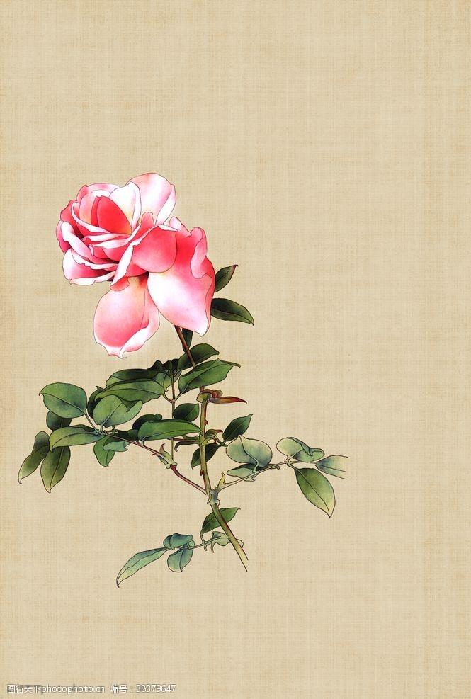 情侣玫瑰花