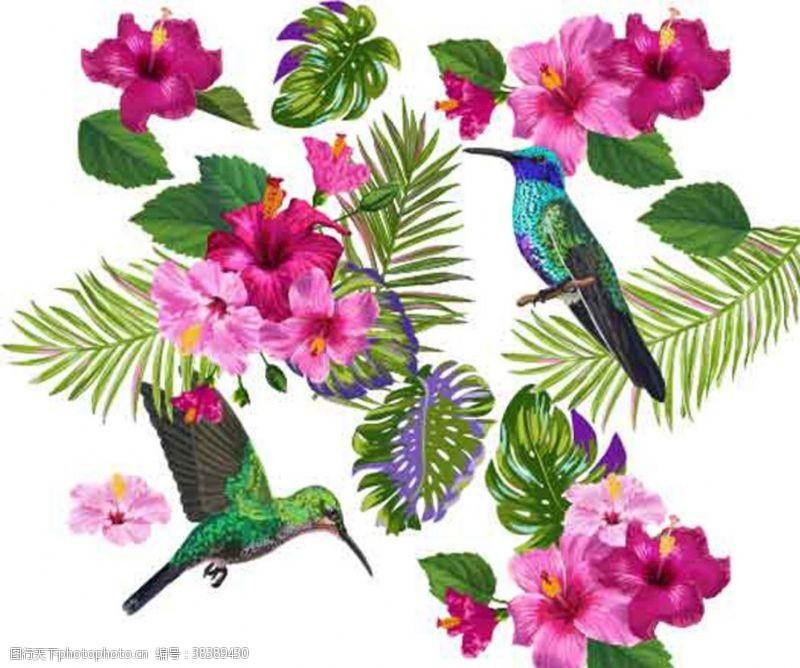 动物热带花鸟