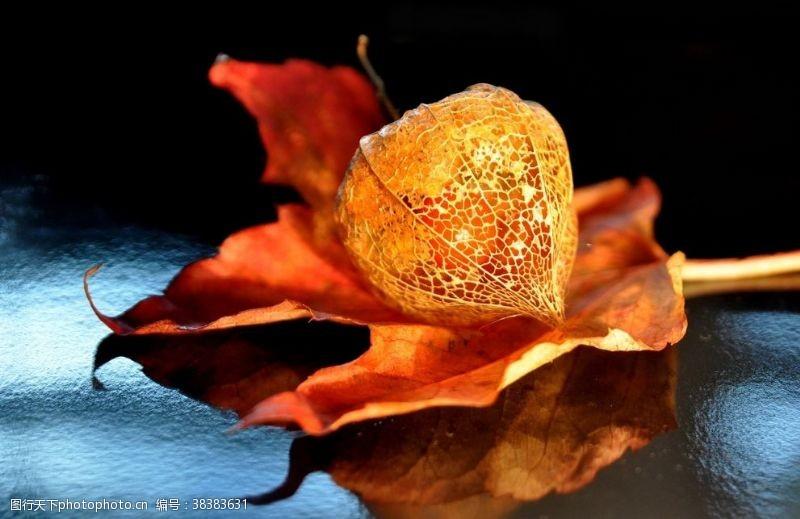 水果广告酸浆果