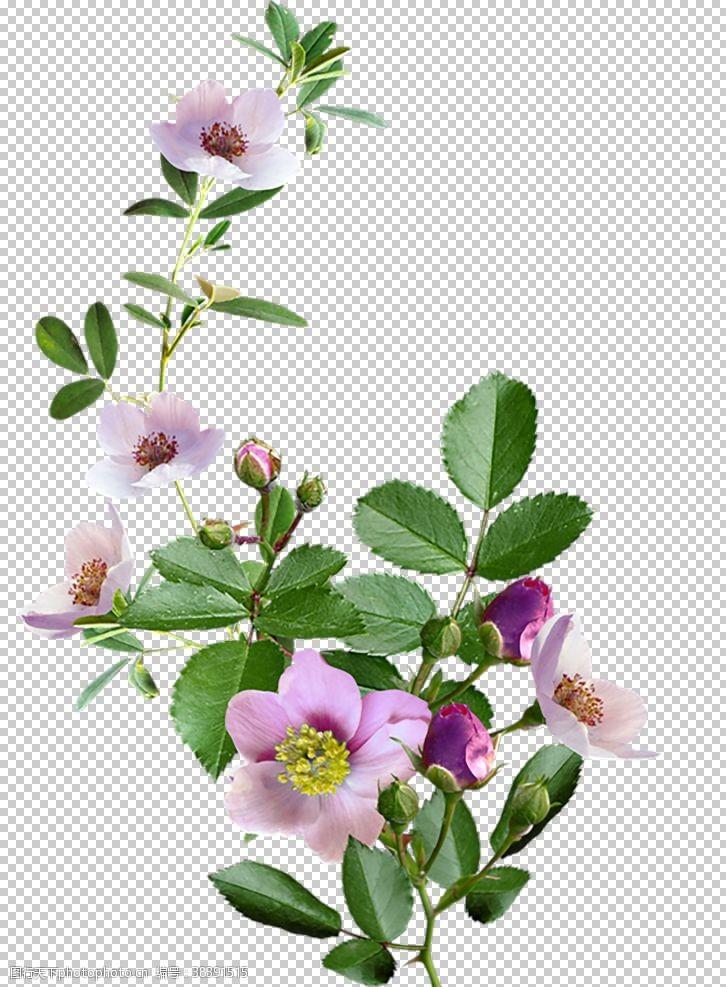 花边鲜花素材