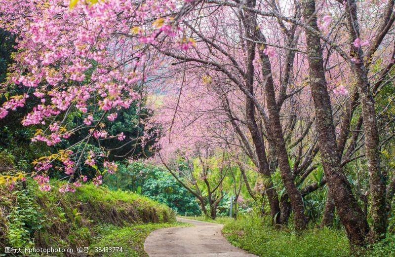 樱花主题樱花树下