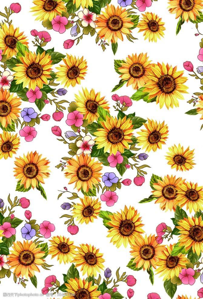 psd分層素材菊花向日葵