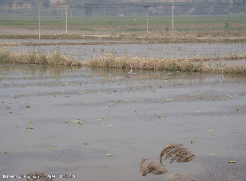 农村旅游湿地