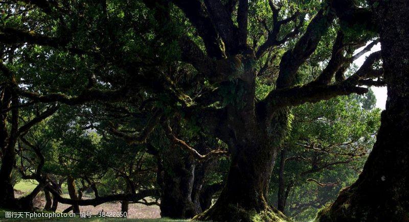 背景图片树林