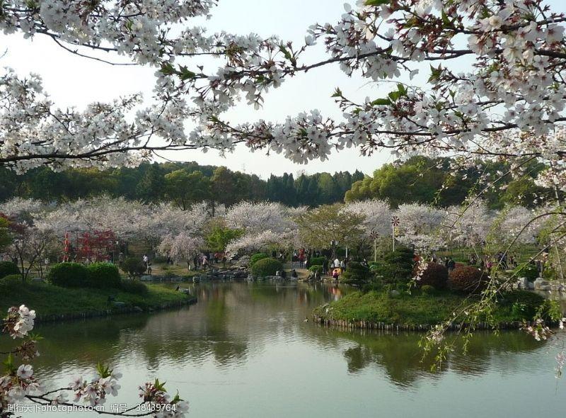春天武漢磨山美景