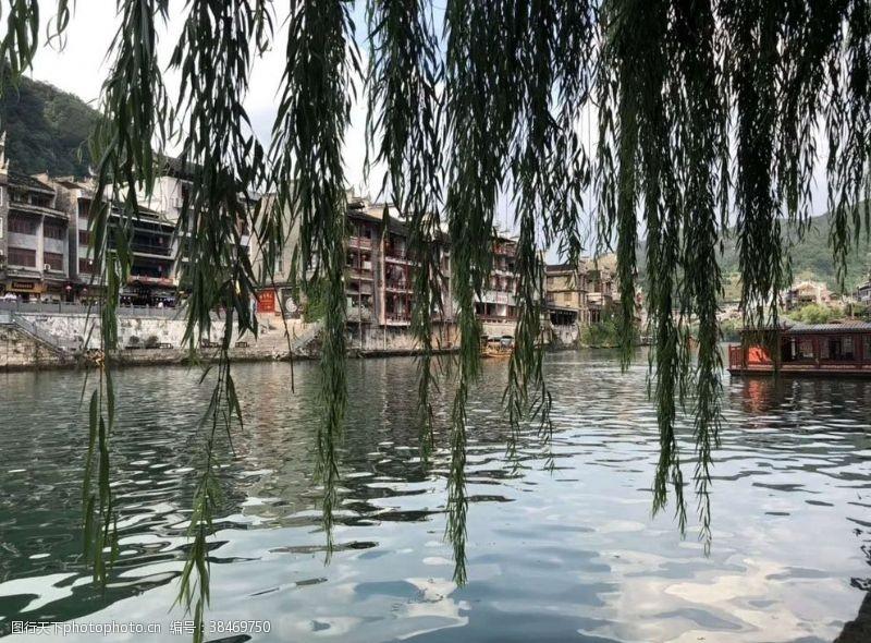 清澈的水古镇的垂柳