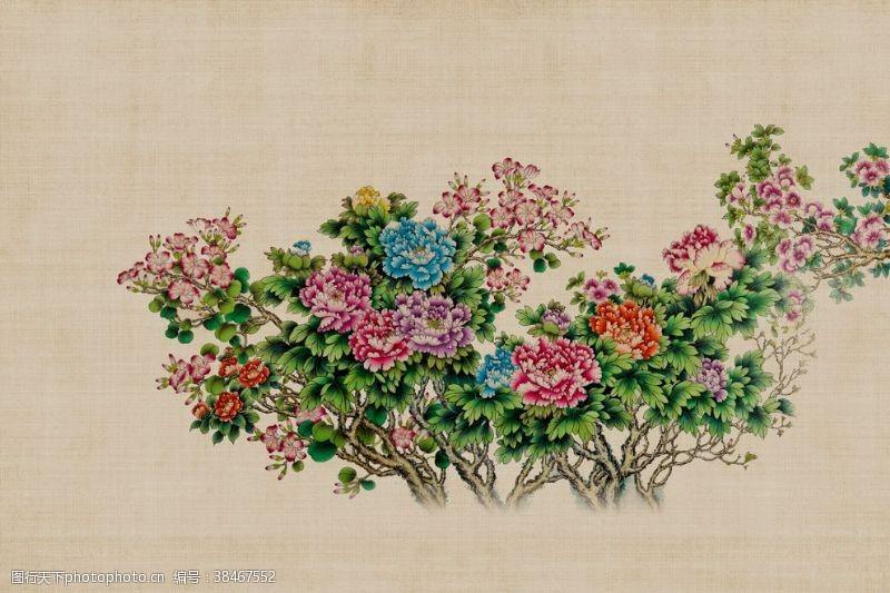 植物牡丹花朵