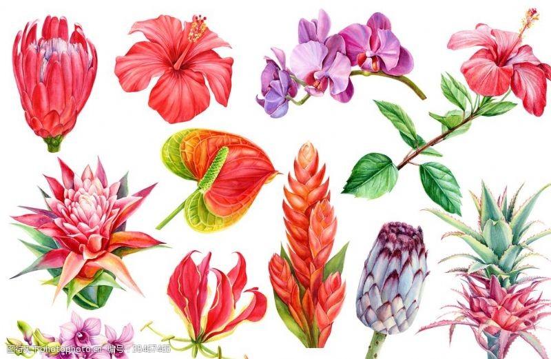 植物手绘花朵