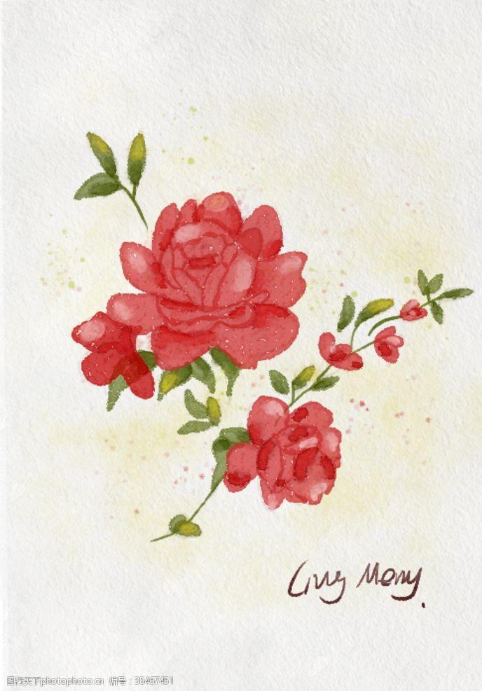 植物水彩玫瑰插画