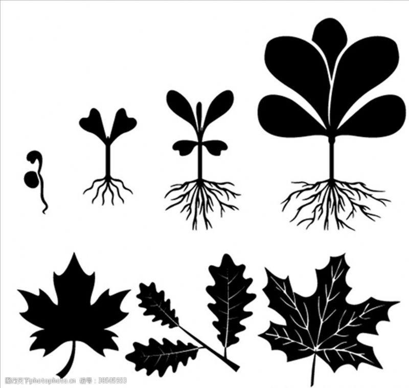 绿色花纹植物生长过程矢量剪影