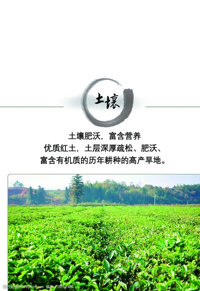 茶画册茶宣传茶文化