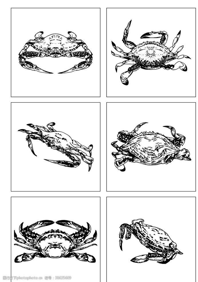 帝王蟹 海鮮梭子蟹寫實手繪線描圖片