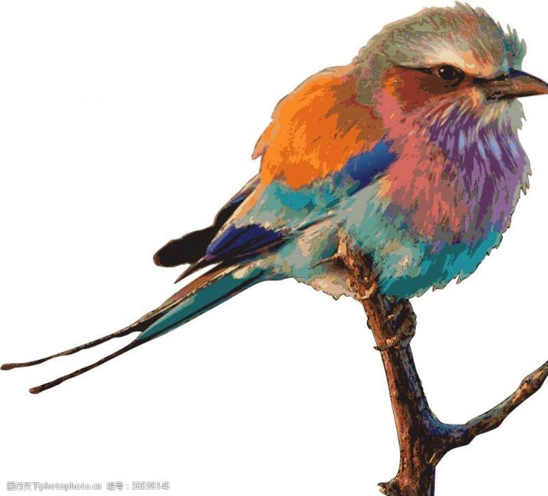 矢量小插图矢量小鸟插图