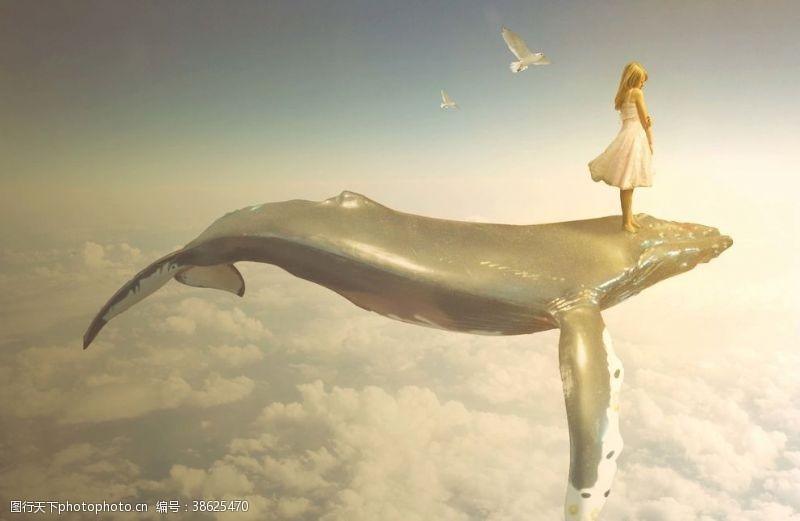 鸽子鲸鱼天空
