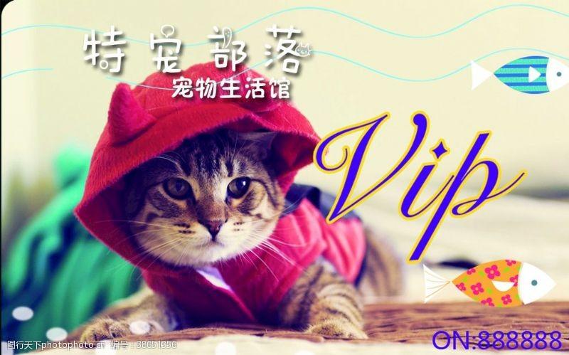 宠物店名片海报