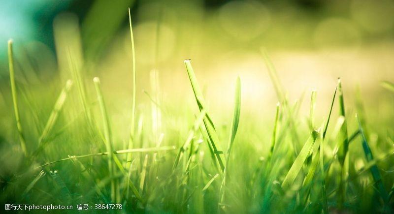 冷色系绿草