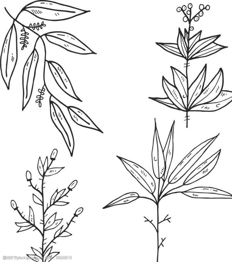 植物剪影 植物树叶线稿图片
