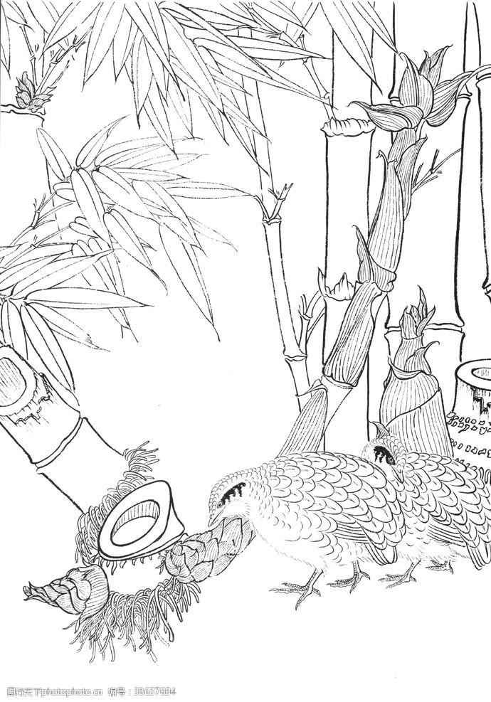 鸽子 中式古典花鸟工笔画图片