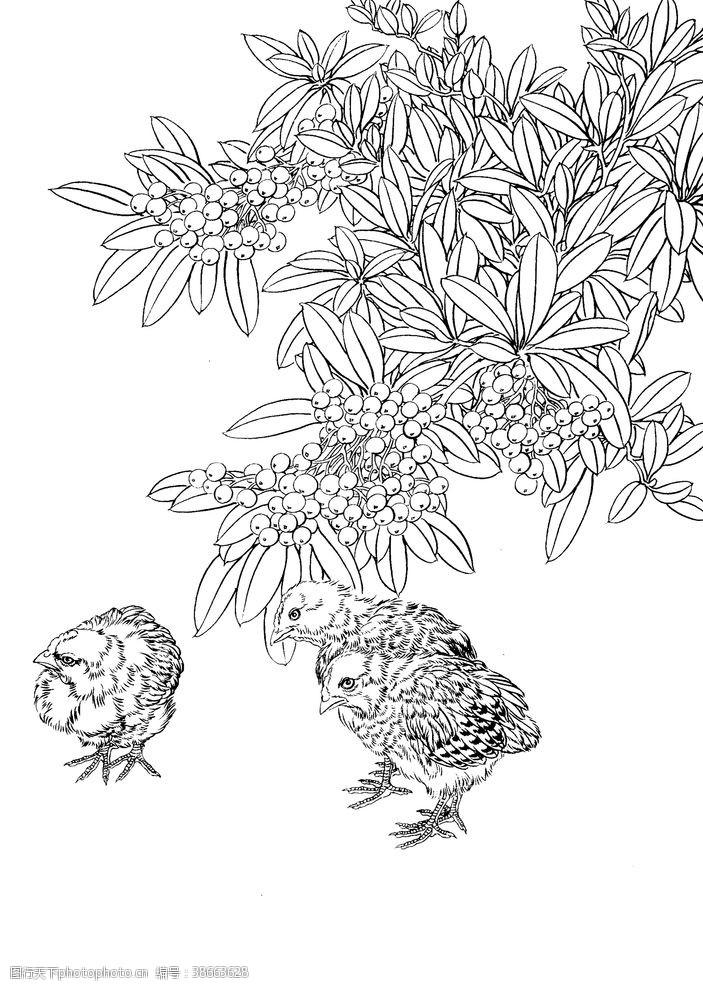 鸽子 鸟雀绘画线稿图图片