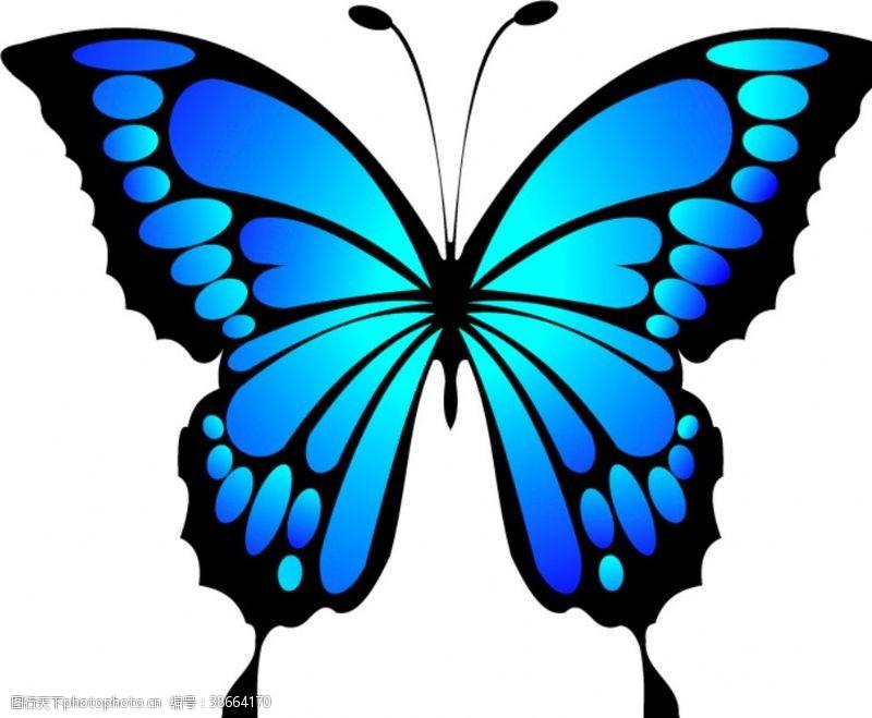 矢量小插图矢量蝴蝶