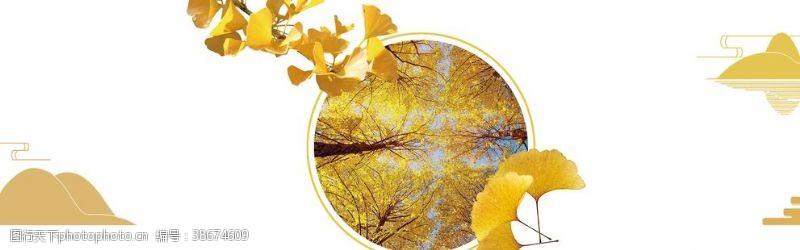 立秋秋分杏树