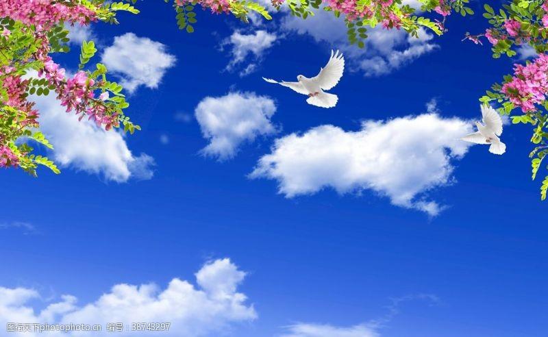 蓝天白云鸽子大图