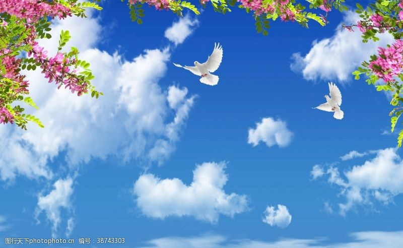 蓝天白云绿叶鸽子大图