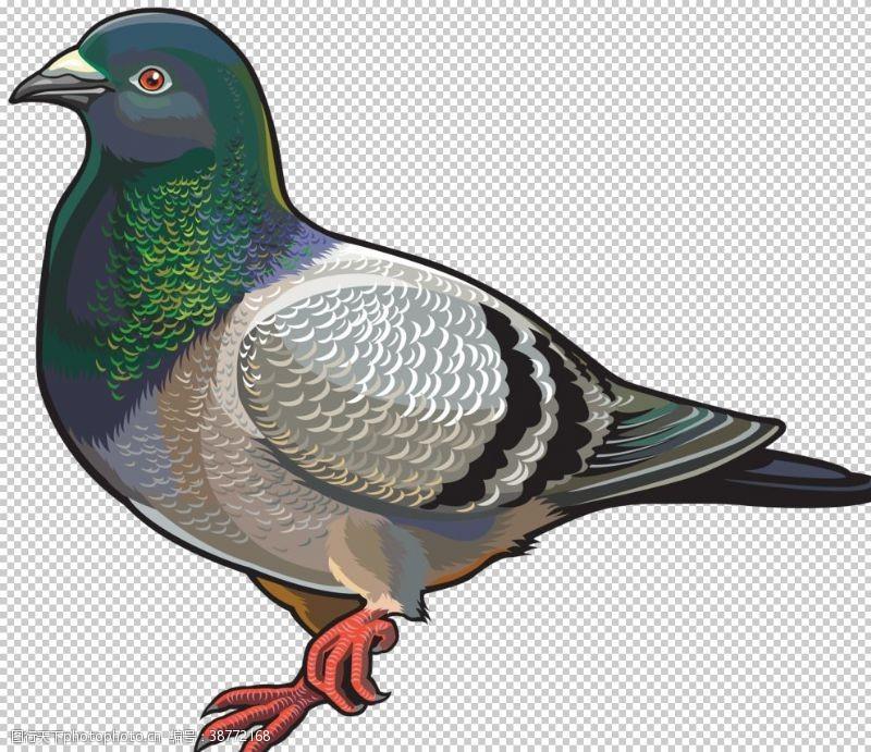 动物鸟禽鸽子图案