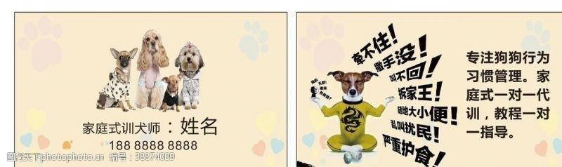 宠物名片图片