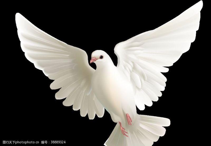 鸽子白色飞翔展翅海报素材