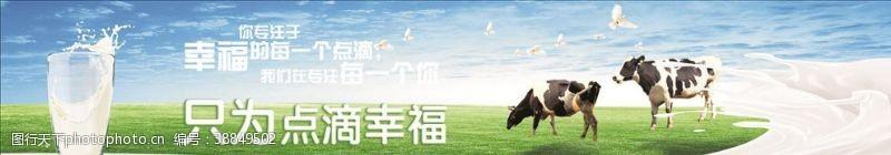 鸽子大草原奶牛和牛奶