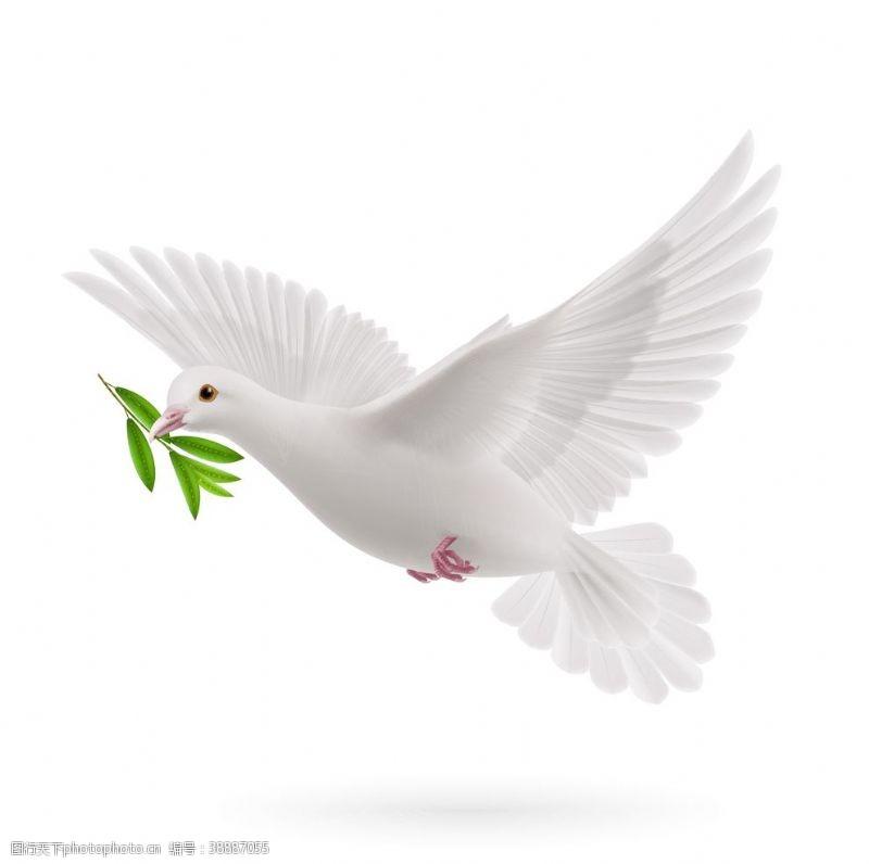 鸽子白色和平公益海报素材