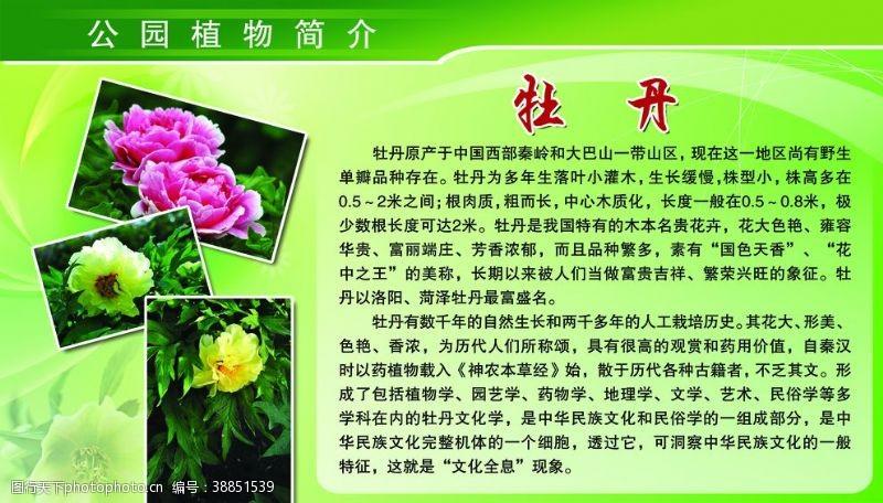 64dpi公园植物简介