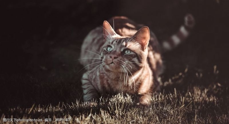 宠物之家猫