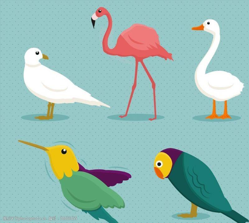 鸽子鸟类品种