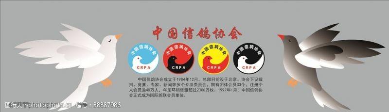 鸽子中国信鸽协会
